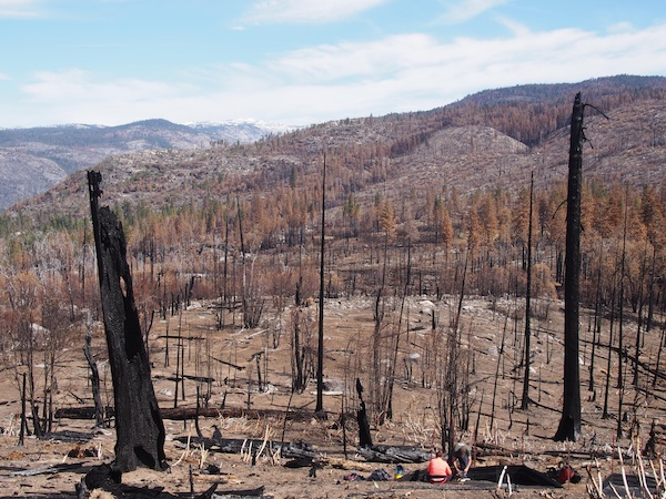 A landscape of burned, charred trees with researchers in the foreground collecting sediment samples.